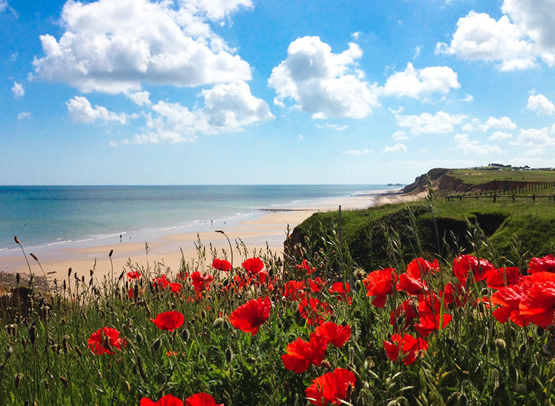 Cliff Top Poppies.jpg